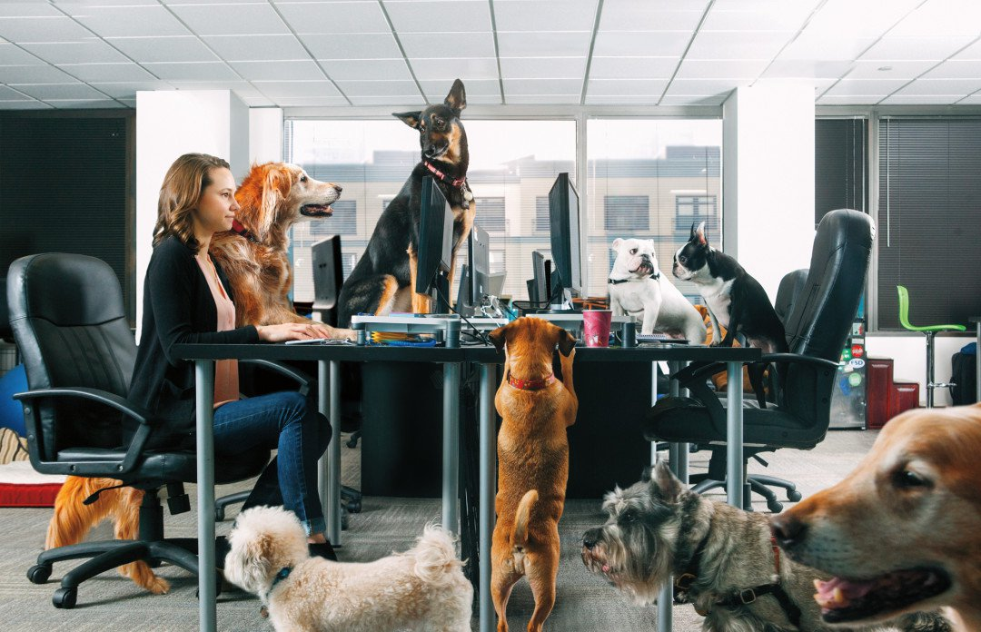 Dog Friendly Office